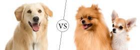 Dog vs Doggy