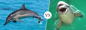 Dolphins vs Porpoises