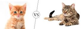Kitten vs Cat
