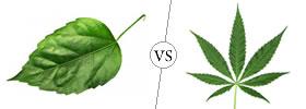 Leaf vs Leaflet