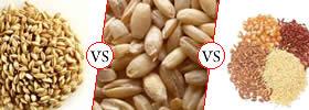Malt vs Barley vs Grain
