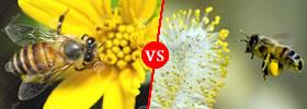 Nectar vs Pollen