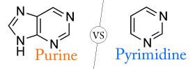 Purine vs Pyrimidine
