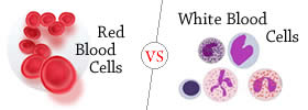 Red Blood Cells vs White Blood Cells