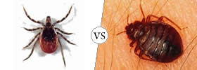 Ticks vs Bed bugs