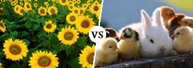 Plant vs Animal