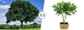 Tree vs Plant