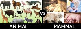 Animal vs Mammal