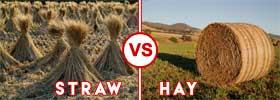 Straw vs Hay