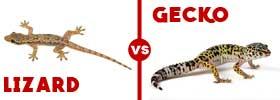 Lizard vs Gecko